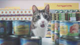 A cat in the supermarket Netto