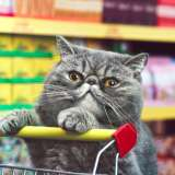 A cat in the Netto supermarket