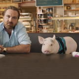 A man and his domestic pig